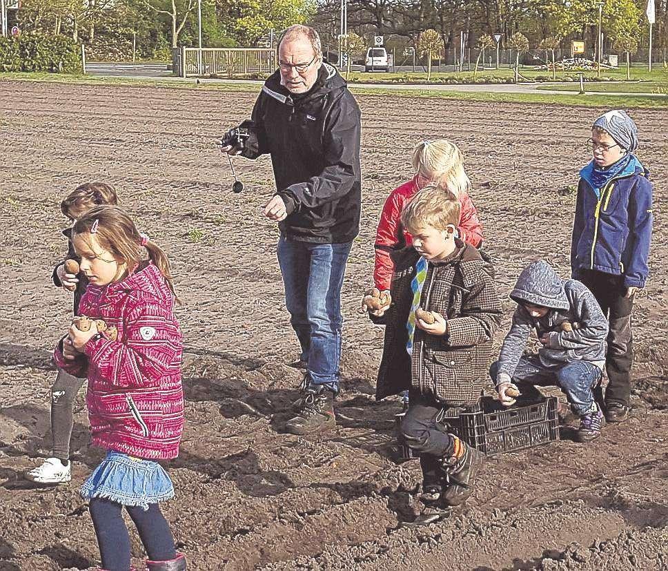 Kinder beim Kartoffeln setzen